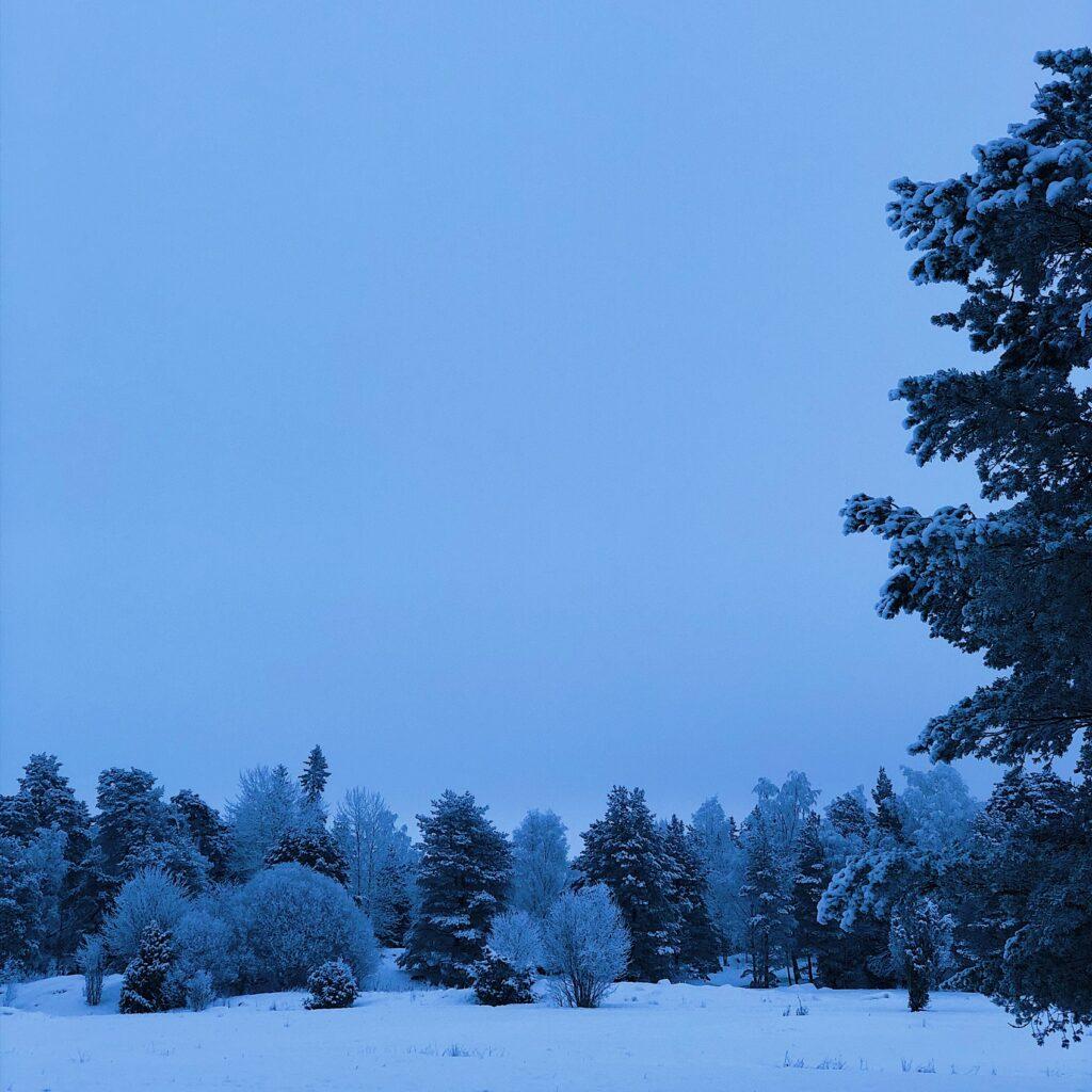 Vintergranar och skog