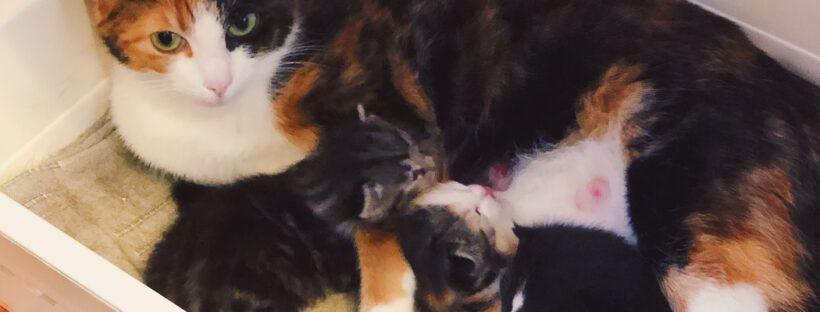 Vårens kull med kattungar